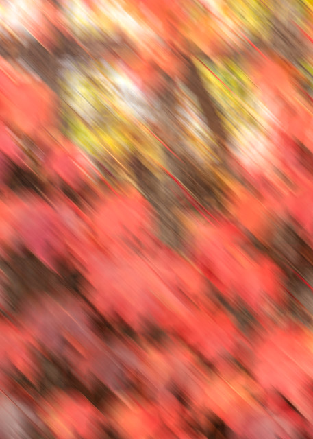 Ivy- fall colored ivy leaves in abstract digital photo art photograph print