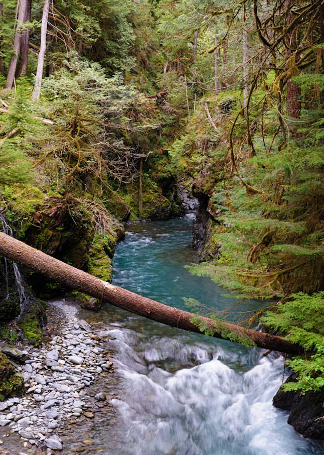Quinault River at Pony Bridge, Olympic National Park, Washington, 2016