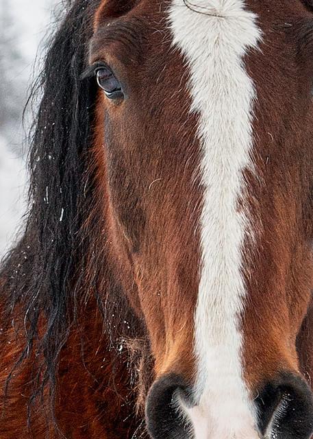 Snow, Colorado, trees, photography, horse, confidence
