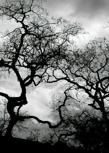 Arboreal Network Photography Art | Ed Sancious - Stillness In Change