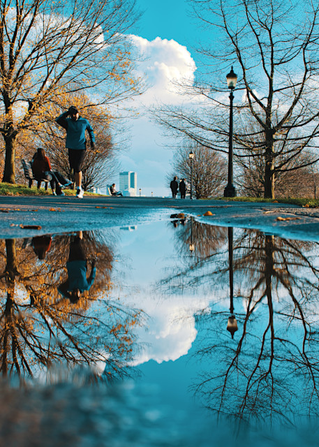 Primrose Puddle Art | Martin Geddes Photography