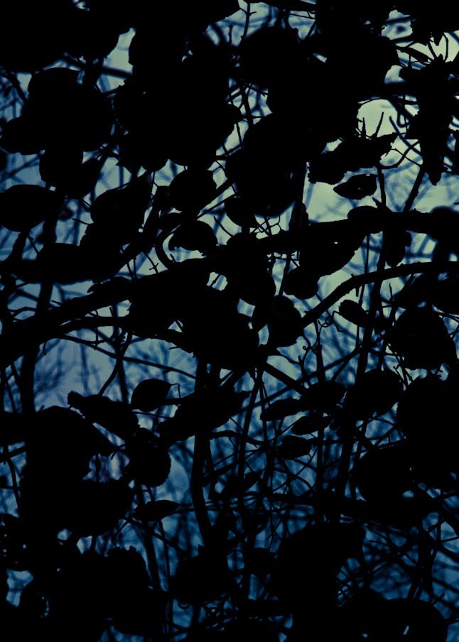 Nightfall and Dreaming