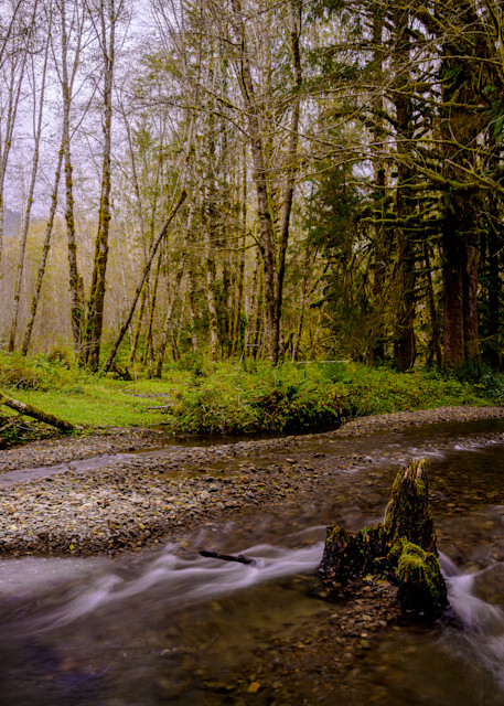 Creek in Quinault River Valley, Washington, 2020