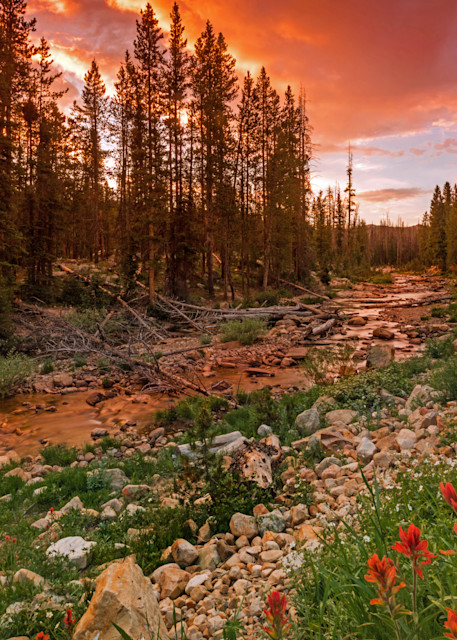 wildflowers along the upper provo river in the uintas