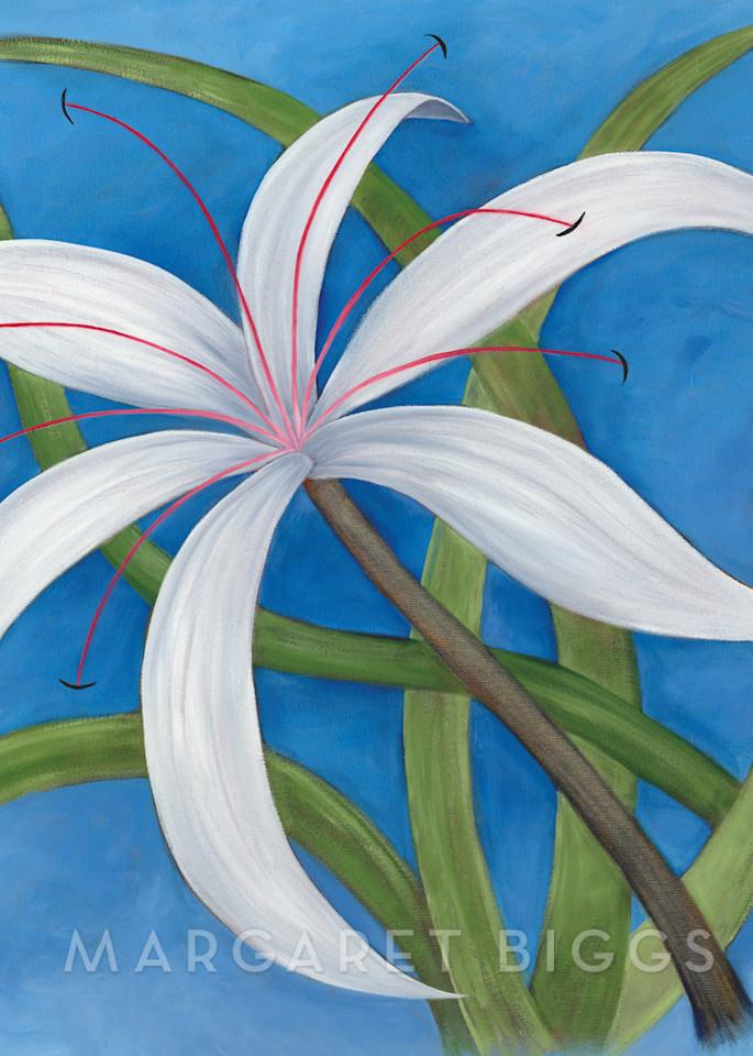 Spider Lily  Art   Margaret Biggs Fine Art