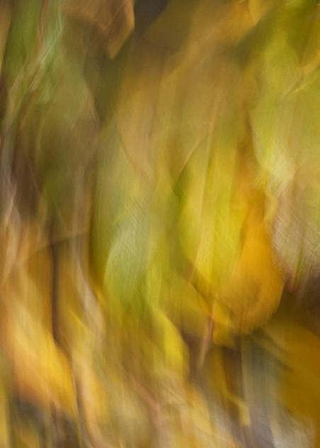 Autumn Leaves Art | Danny Johananoff