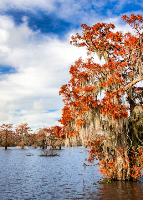 Fall in the Swamp - Louisiana swamp fine-art photography prints