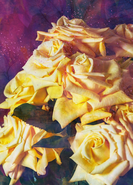 Roses In Spring Photography Art   Elizabeth Stanton Photography
