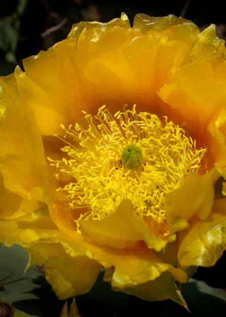 Prickly Pear Photography Art | Rick Gardner Photography