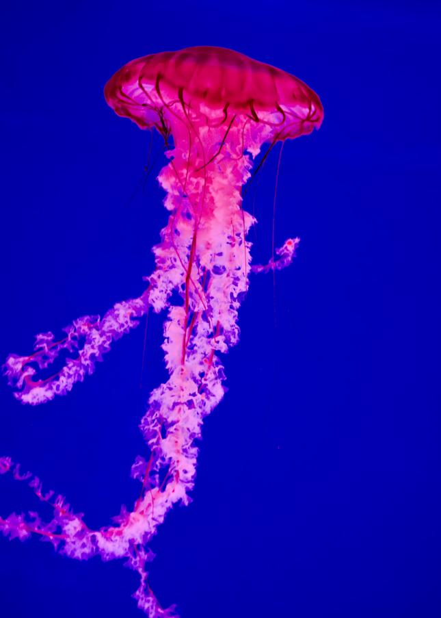 Flourescing Jellyfish Photography Art | Hatch Photo Artistry LLC