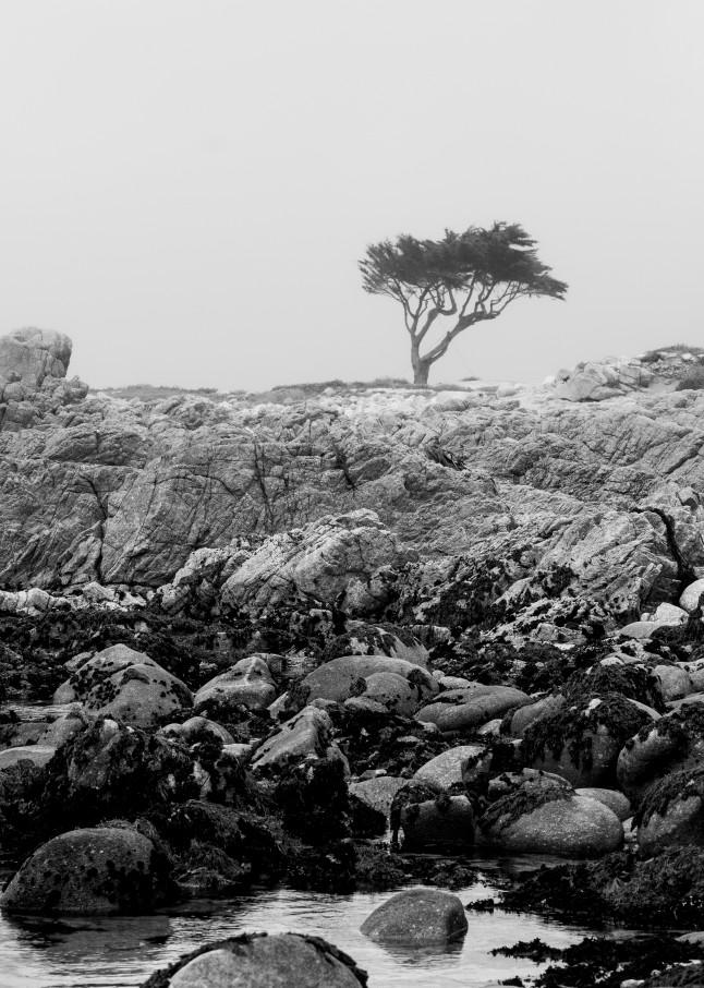 Asilomar Tree Art | James Alfred Friesen