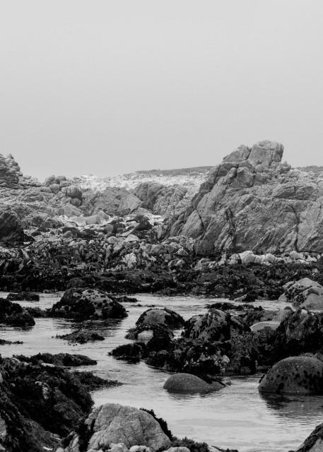 Ocean, Stone & Tree Art | James Alfred Friesen