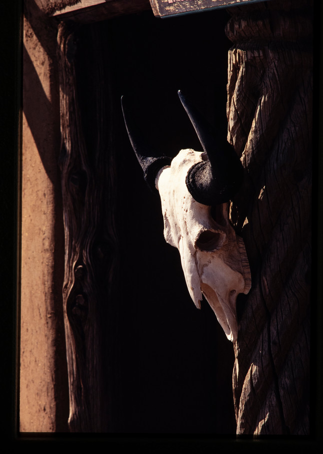 Cow Skull And Door Photography Art | Christopher Grey Studios