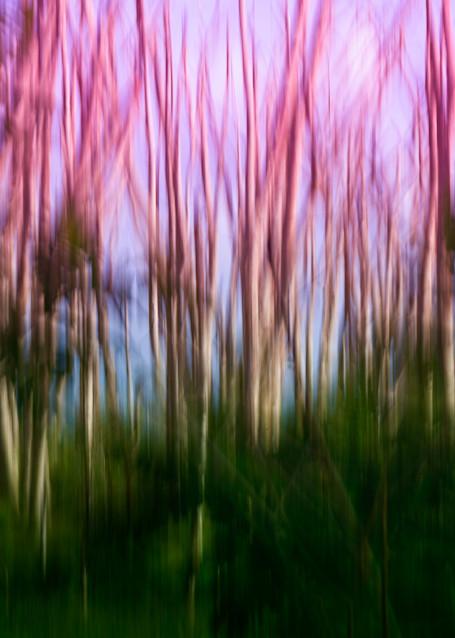 Albizia Ii Photography Art   Sheryl's Virtual Garden