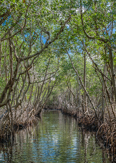 Glad To Be In The Glades Photography Art | kramkranphoto