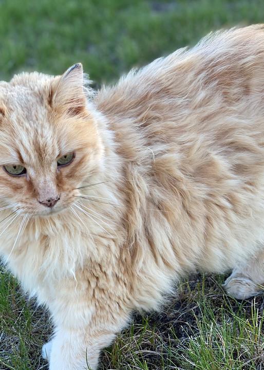 Kiki The Cool Cat Photography Art   Visionary Adventures, LLC
