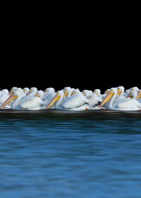 Constance Mier Photography - fine art bird prints