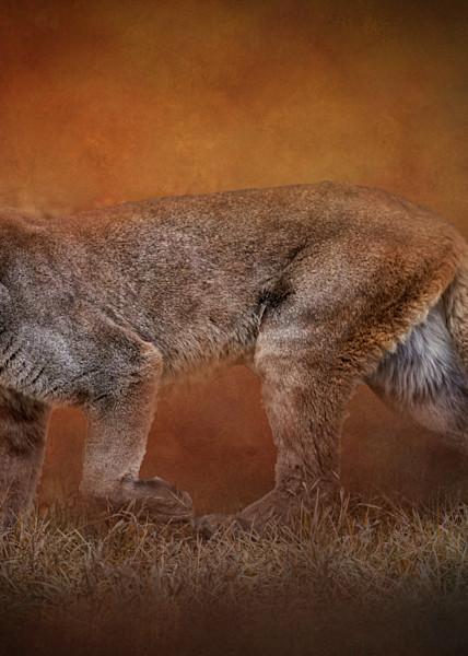 Mountain Lion on Textured Background