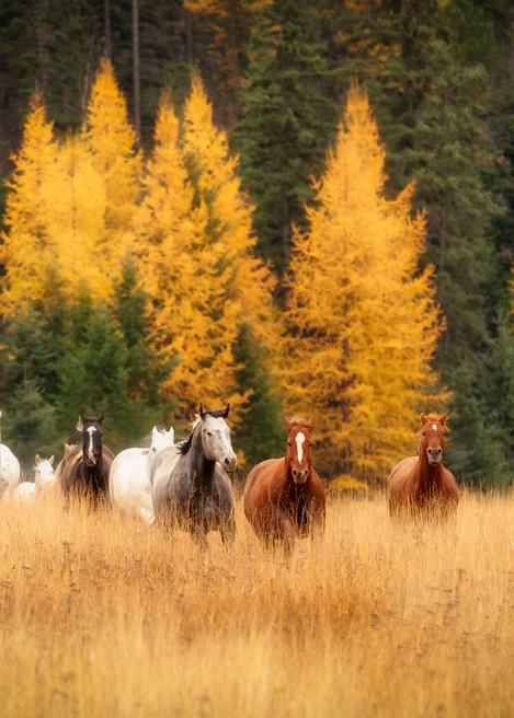 Running Herd of Horses