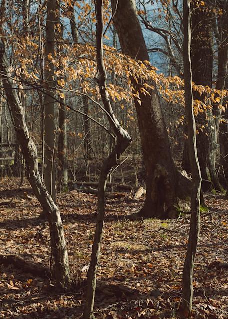 Nature Color 8298 Photography Art | Dan Chung Fine Art