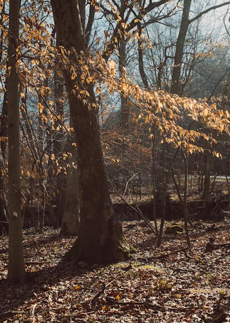 Nature Color 8300 Photography Art | Dan Chung Fine Art