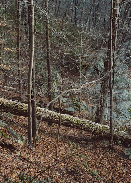 Nature Color 8382 Photography Art | Dan Chung Fine Art