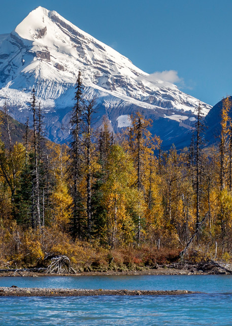 Fall landscape of a grizzly bear in Crescent Lake in Lake Clark National Park with Mt. Redoubt volcano in the backgound.    Photo by Jeff Schultz/SchultzPhoto.com  (C) 2016  ALL RIGHTS RESVERVED