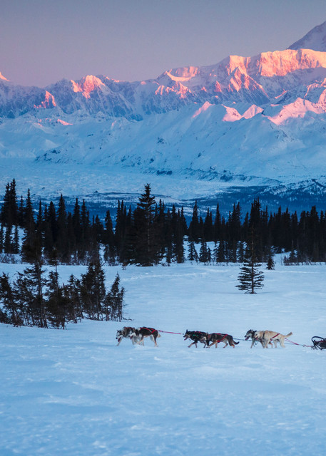 Recreational dog mushing in Denali State Park   Alaska Range and Mt. Mckinley background.  Spring PHOTO (C) BY JEFF SCHULTZ / ALL RIGHTS RESERVED