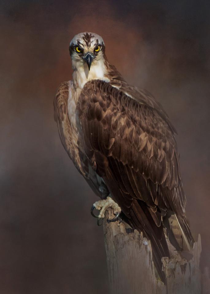 Osprey Eyes!