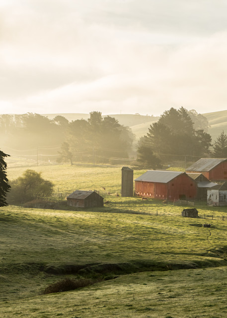 Apple Garden Farm - Petaluma, California countryside sunrise landscape photograph print