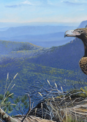 Wedge-tailed Eagle - Before the Descent
