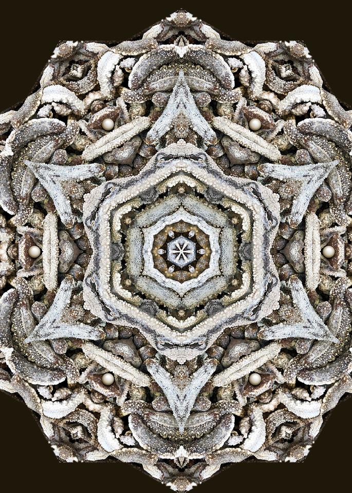 Sea Cucumber Kaleidoscope