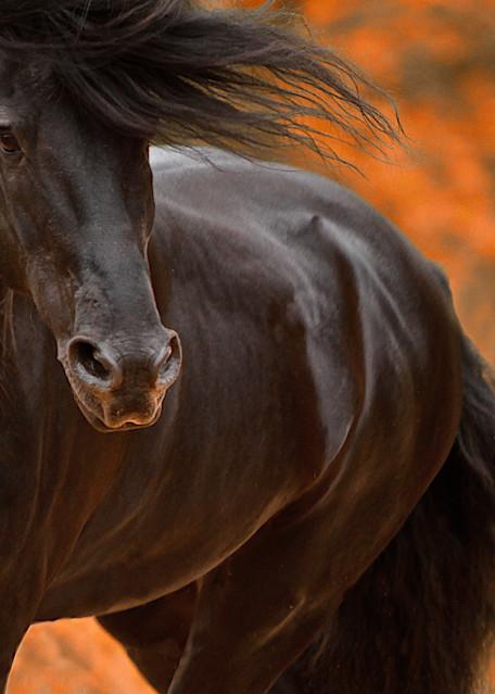 Friesian stallion, Beauty of the Knight print
