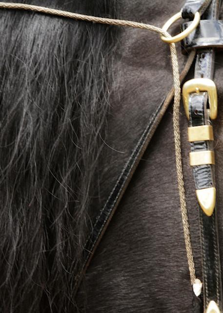 Close Up friesian horse face print