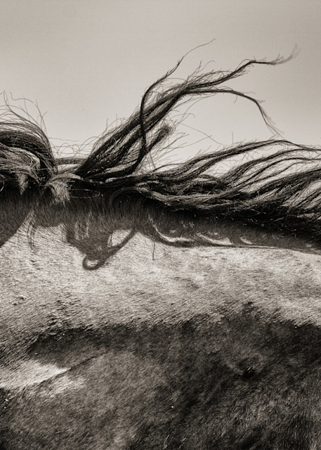 Close up wind torn wild horse mane print