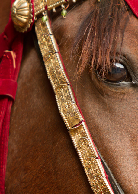 Close up of decorated Marwari horse.