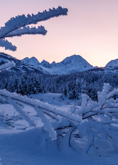 Winter landscape of Kenai Mountains at sunrise with snow and frost covered trees at Turnagain Pass. Hoarfrost on willows  Kenai Penninsula Alaska