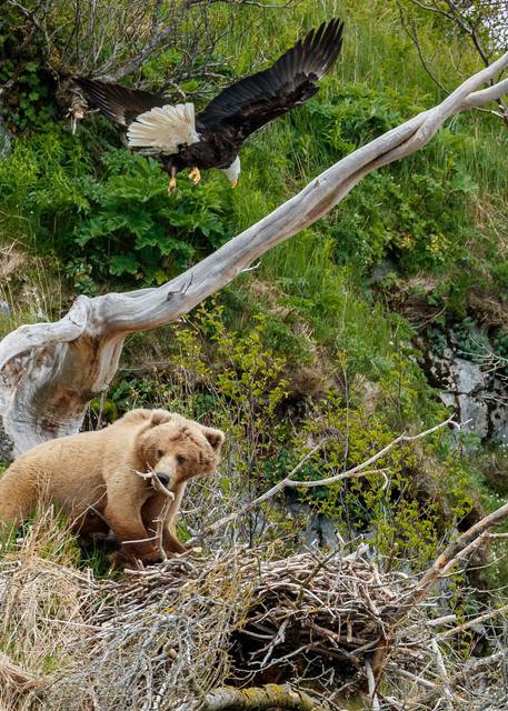 Bear and Eagle Nest 3