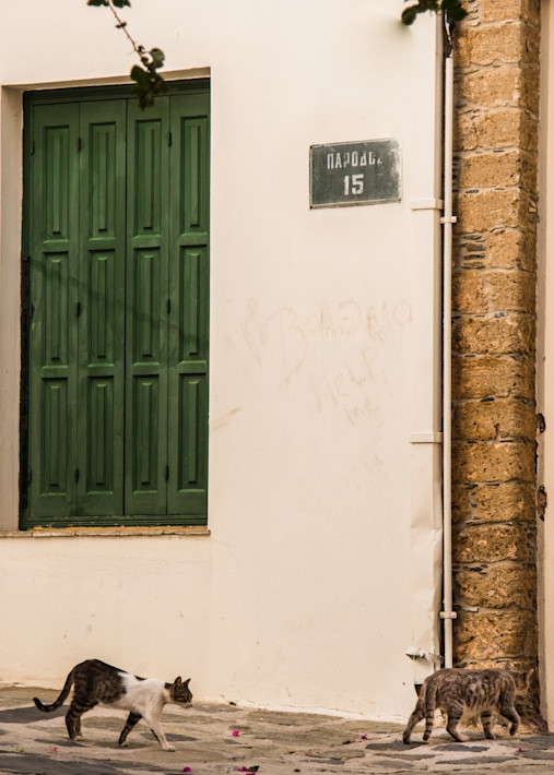 Cats Passing Green Shutters, Skopelos Photography Art | Ben Asen Photography