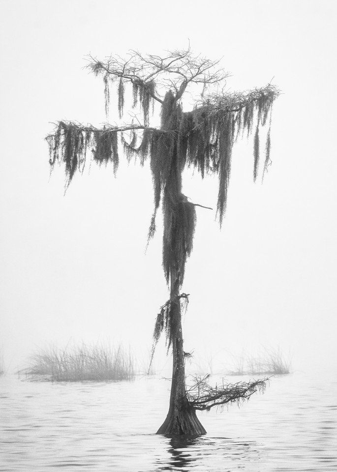 Alone - Florida swamp fine-art photography prints
