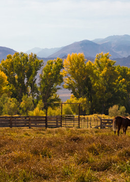 Grazing Horses Photography Art | Leiken Photography