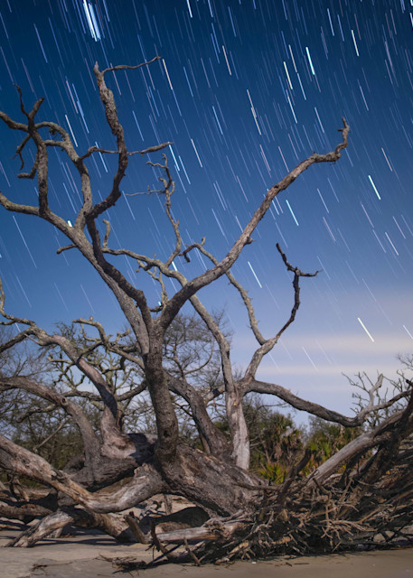 Driftwood & Stars Photography Art | Scott Krycia Photography