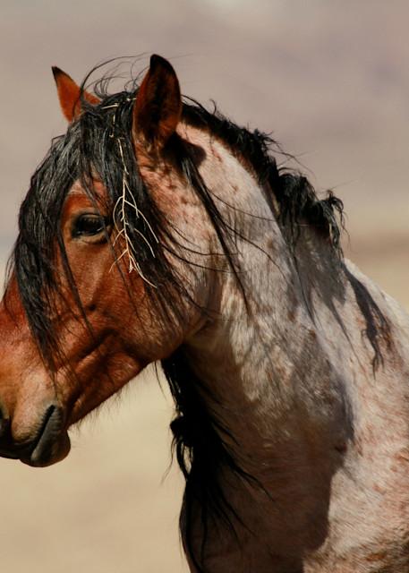 Wild black roan stallion print