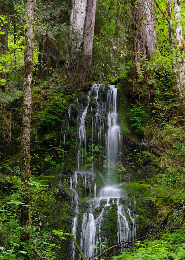 Springtime Waterfall, Olympic National Park, WA, 2016