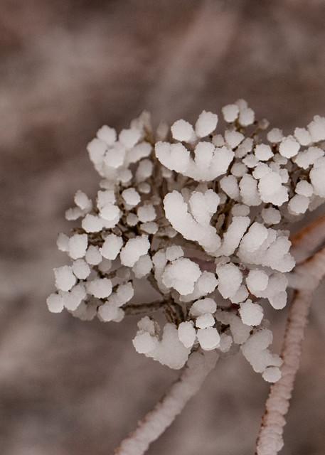 Ice On Seed Pods 1265 Fss Art | Koral Martin Fine Art Photography
