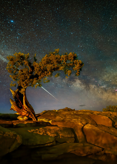 Star Link Photography Art | McKendrick Photography