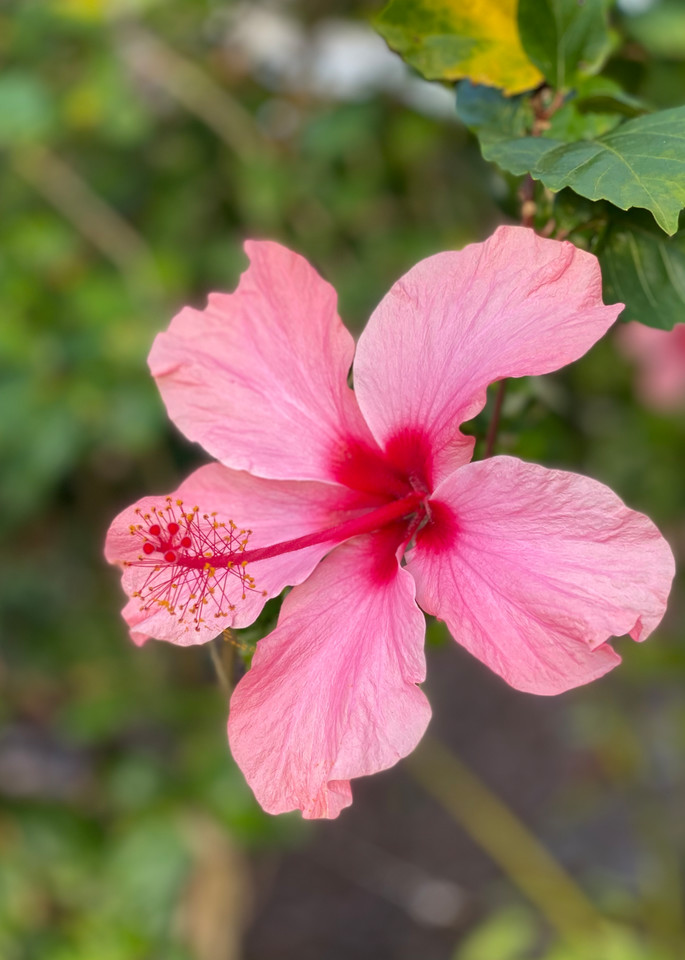 For The Love Of Pink Photography Art | Visionary Adventures, LLC