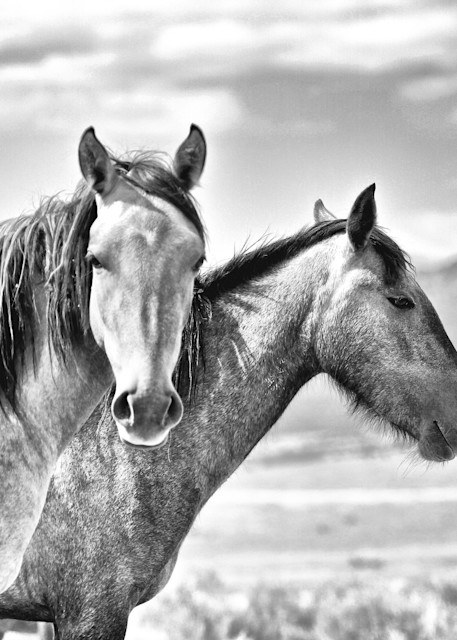 Two wild horses black and white print