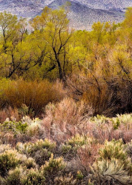 California Grasses Photography Art | Felice Willat Photography