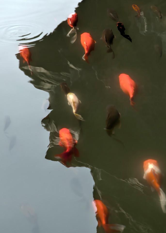 Master Koi Photography Art | Felice Willat Photography